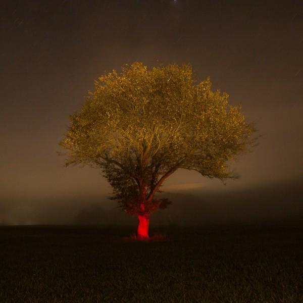 photographie, couleurs, nuit, arbre peint avec une lumière rouge